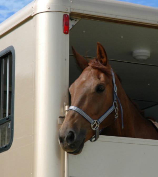 Catégorie transport de chevaux