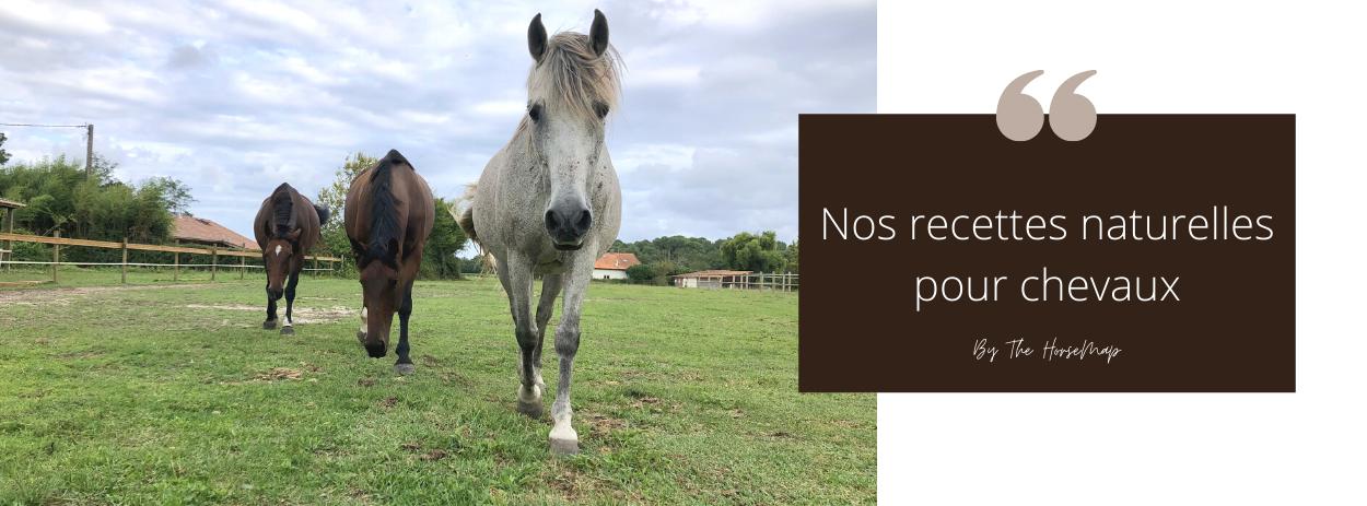 recettes naturelles friandises répulsif insectes pour chevaux poneys