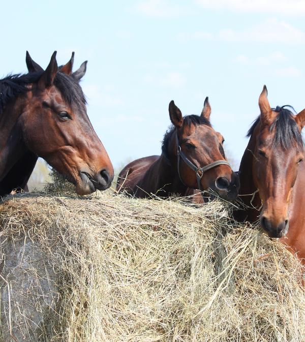 categorie alimentation HorseMap