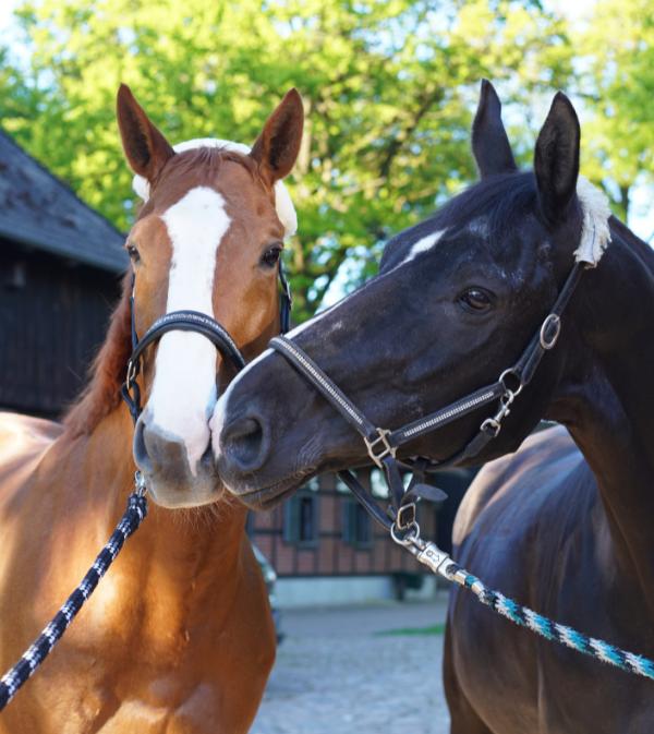 catégorie cheval poney HorseMap