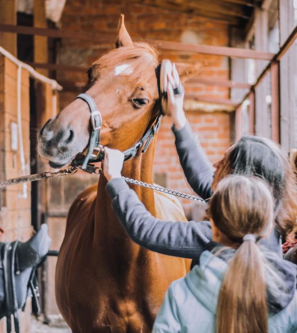 categorie grooms HorseMap